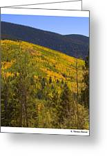 Aspen Vista Greeting Card
