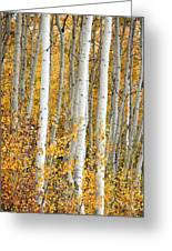 Aspen With Fall Color Greeting Card