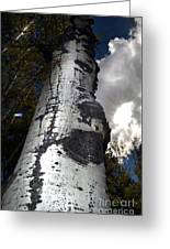 Aspens And A Cool Breeze Greeting Card