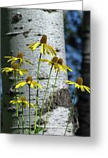 Aspens And Arnicas Greeting Card