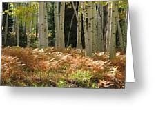 Aspens And Ferns Greeting Card