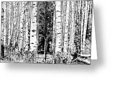 Aspens And The Pine Black And White Fine Art Print Greeting Card