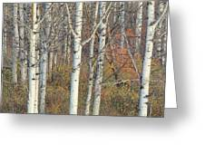 Aspens At Dusk Greeting Card