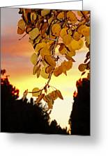 Aspens At Sunset Greeting Card