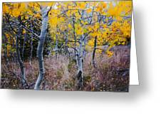 Aspens In Autumn Greeting Card