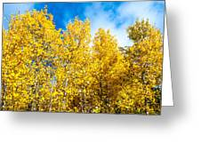 Aspens In Blue Greeting Card