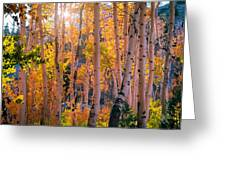 Aspens In Fall Color Greeting Card