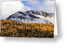 Aspens In Fall Colors Greeting Card