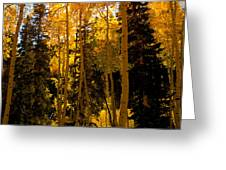 Aspens In Fall Greeting Card