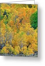 Aspens In Fall Eastern Sierras California Greeting Card