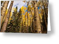 Aspens In Santa Fe 3 Greeting Card