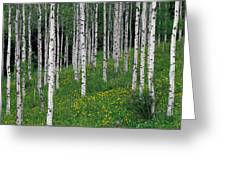 Aspens In Spring Greeting Card