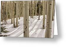 Aspens In Winter 2 Panorama - Santa Fe National Forest New Mexico Greeting Card