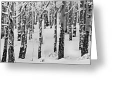 Aspens In Winter Greeting Card