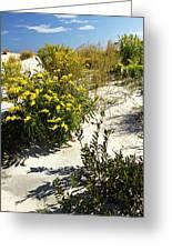 Assateague Beach 5 Greeting Card