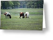 Assateague Island - Wild Ponies And Their Buddies  Greeting Card