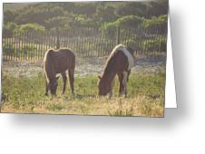 Assateague Island Wild Ponies Greeting Card