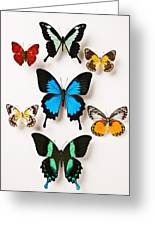 Assorted Butterflies Greeting Card
