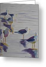 Assorted Gulls Greeting Card