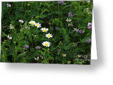 Aster And Daisies Greeting Card