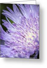 Aster Bloom Greeting Card
