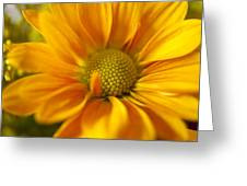 Aster Close Up Greeting Card
