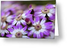 Aster Delights Greeting Card