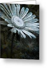 Aster On Rock Greeting Card