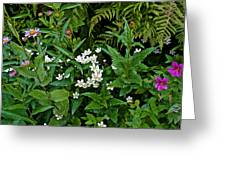 Asters And Fringed Grass-of-parnassus And Red Monkeyflowers On Highline Trail In Glacier National Pa Greeting Card