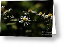 Aster's Branch Greeting Card