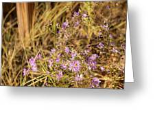 Asters In Autumn Greeting Card