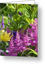 Astilbe In The Garden Greeting Card
