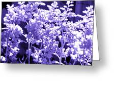 Astilbleflowers In Violet Hue Greeting Card