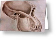 Astralopithecus Afarensis Cranium Greeting Card