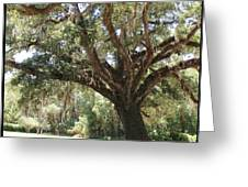 Astride Mighty Oak Greeting Card