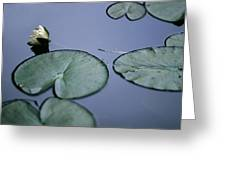 At Claude Monet's Water Garden 2 Greeting Card
