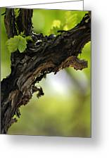 At Lachish Vineyard Greeting Card