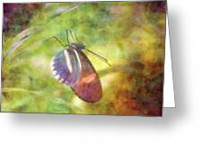 At Rest 8196 Idp_2 Greeting Card