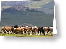 Castelluccio Di Norcia, Parko Nazionale Dei Monti Sibillini, Italy Greeting Card