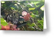 At The Butterfly Expo 2 Greeting Card