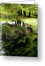 At The Edge Of The Forest Pond. Greeting Card