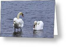 At Your Service. Mute Swan Greeting Card