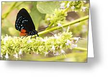 Atala Greeting Card
