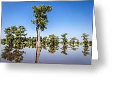 Atchafalaya Cypress Tree Greeting Card