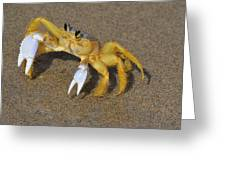 An Atlantic Ghost Crab Playing In The Tide 3 Greeting Card