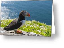 Atlantic Puffins, Fratercula Arctica Greeting Card by Keenpress