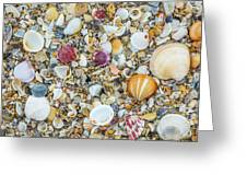 Atlantic' Shells Color Greeting Card