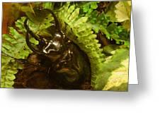 Atlas Beetle Greeting Card