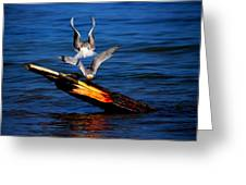 Atop A Tern Greeting Card