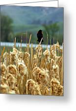 Atop The Cattails Greeting Card